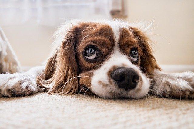 leczenie-psa